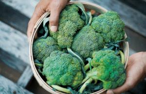 brocoli vitamines A C E sels minéraux antioxydants