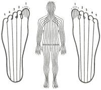 zones réflexologie